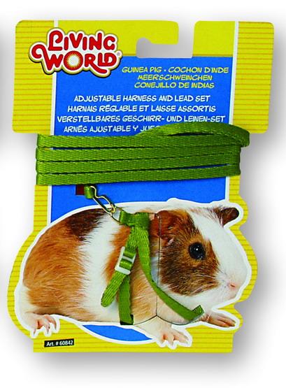 Лабиринты для морских свинок